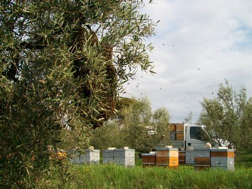 Transport de ruches
