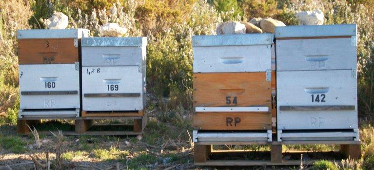 Ruches d'abeilles en bois
