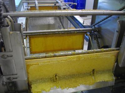 Récolte du miel en Provence